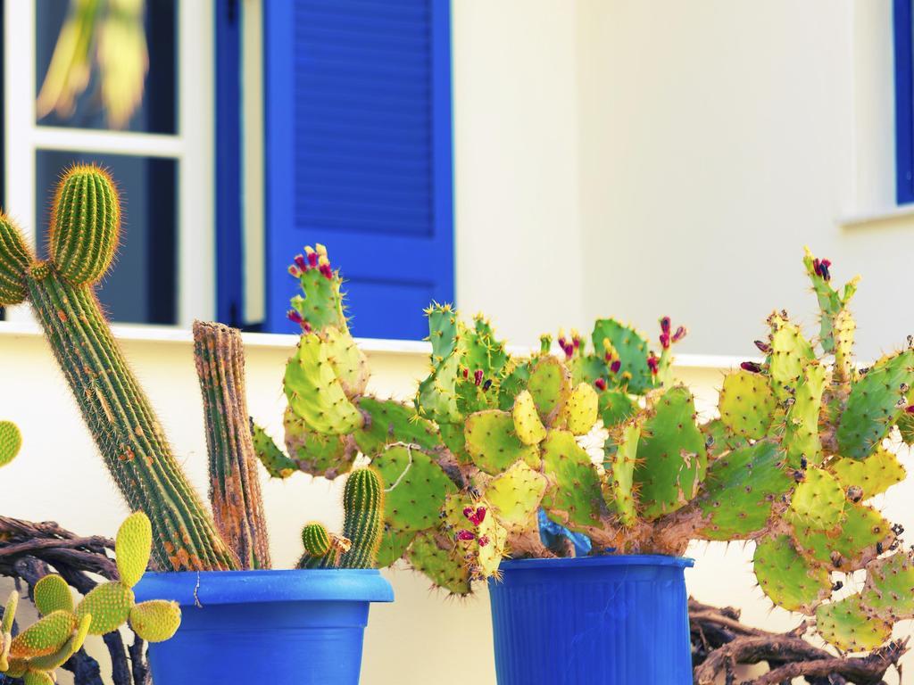 substrat cactus terre pour cactus ooreka. Black Bedroom Furniture Sets. Home Design Ideas