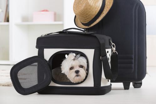 cage pour chien caract ristiques normes et prix ooreka. Black Bedroom Furniture Sets. Home Design Ideas
