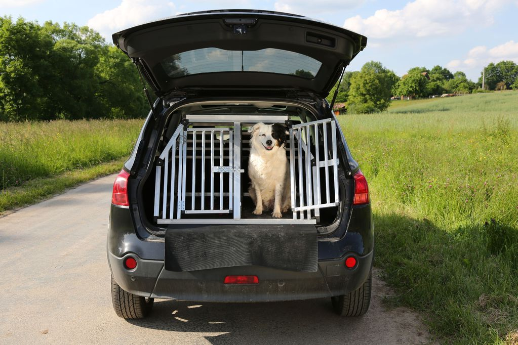 transport des chiens en voiture r gles pr cautions ooreka. Black Bedroom Furniture Sets. Home Design Ideas