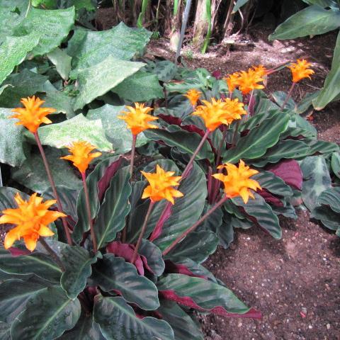 Plante Verte Avec Fleur Orange 28 Images Plante Grimpante D Int
