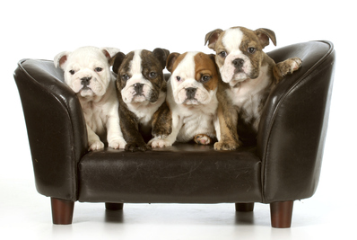 Canapé chien