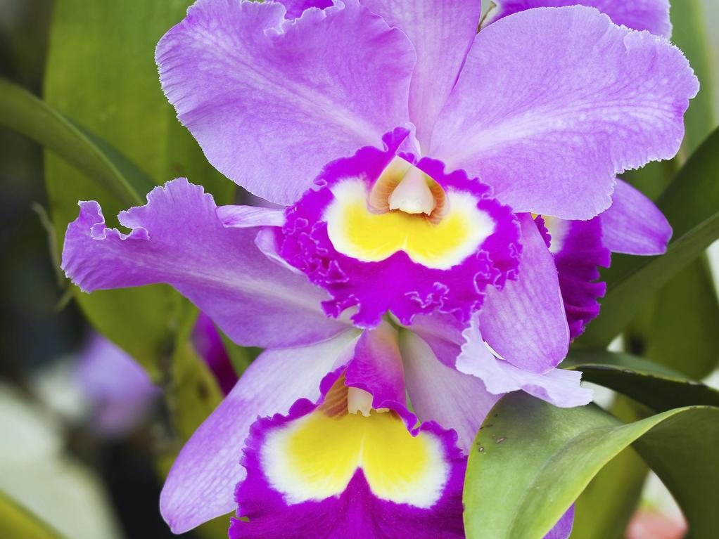 Engrais orchid e ooreka - Quand rempoter une orchidee ...