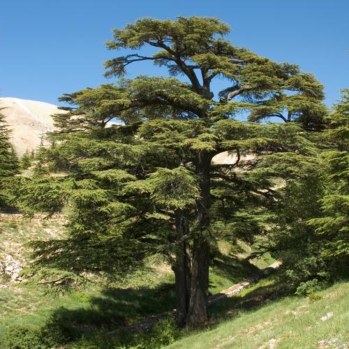 Bien-aimé Quels arbres planter en décembre ? PF18