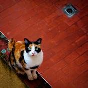 chatte en furie site de rencontre gratuit 10