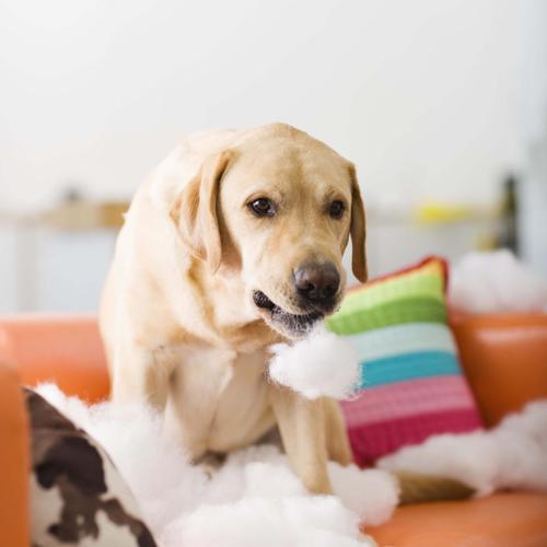 Conseils de remplacement de la mousse de son canapé