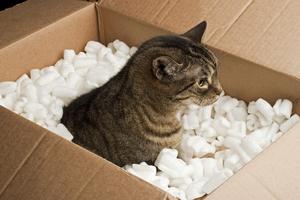 demenagement d'un chat