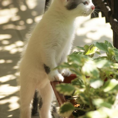 4 m thodes pour loigner les chats de son potager ooreka - Repulsif pour chats dans les jardins ...