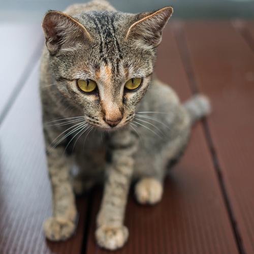 Soigner un chat piqué par une guêpe - Ooreka