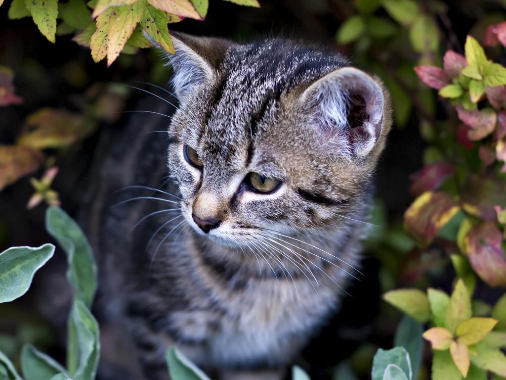 plante interieur compatible chat