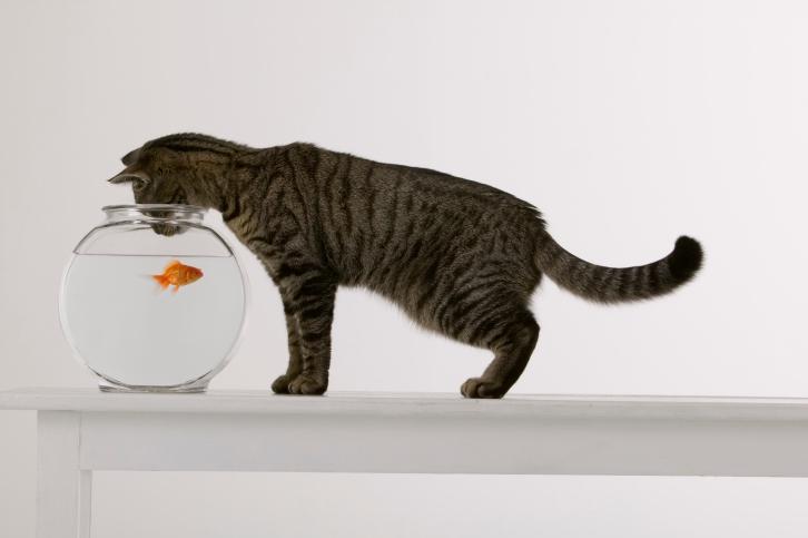 Manger du poisson pourquoi c 39 est bon ooreka for Manger pour poisson