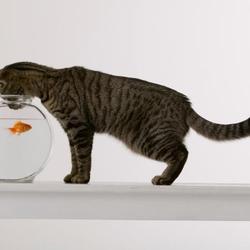 7 raisons de manger du poisson