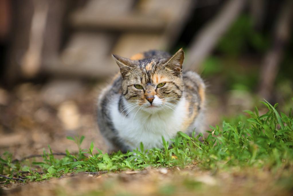 Constipation du chat