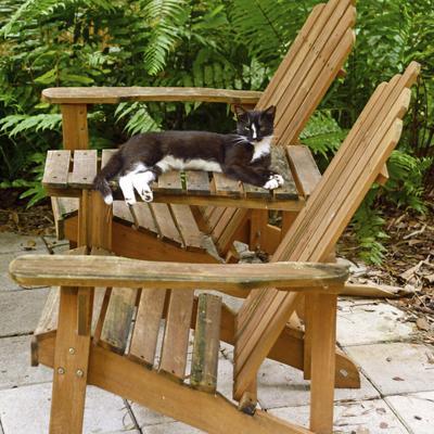 comment faire fuir les chats comprendrechoisir. Black Bedroom Furniture Sets. Home Design Ideas