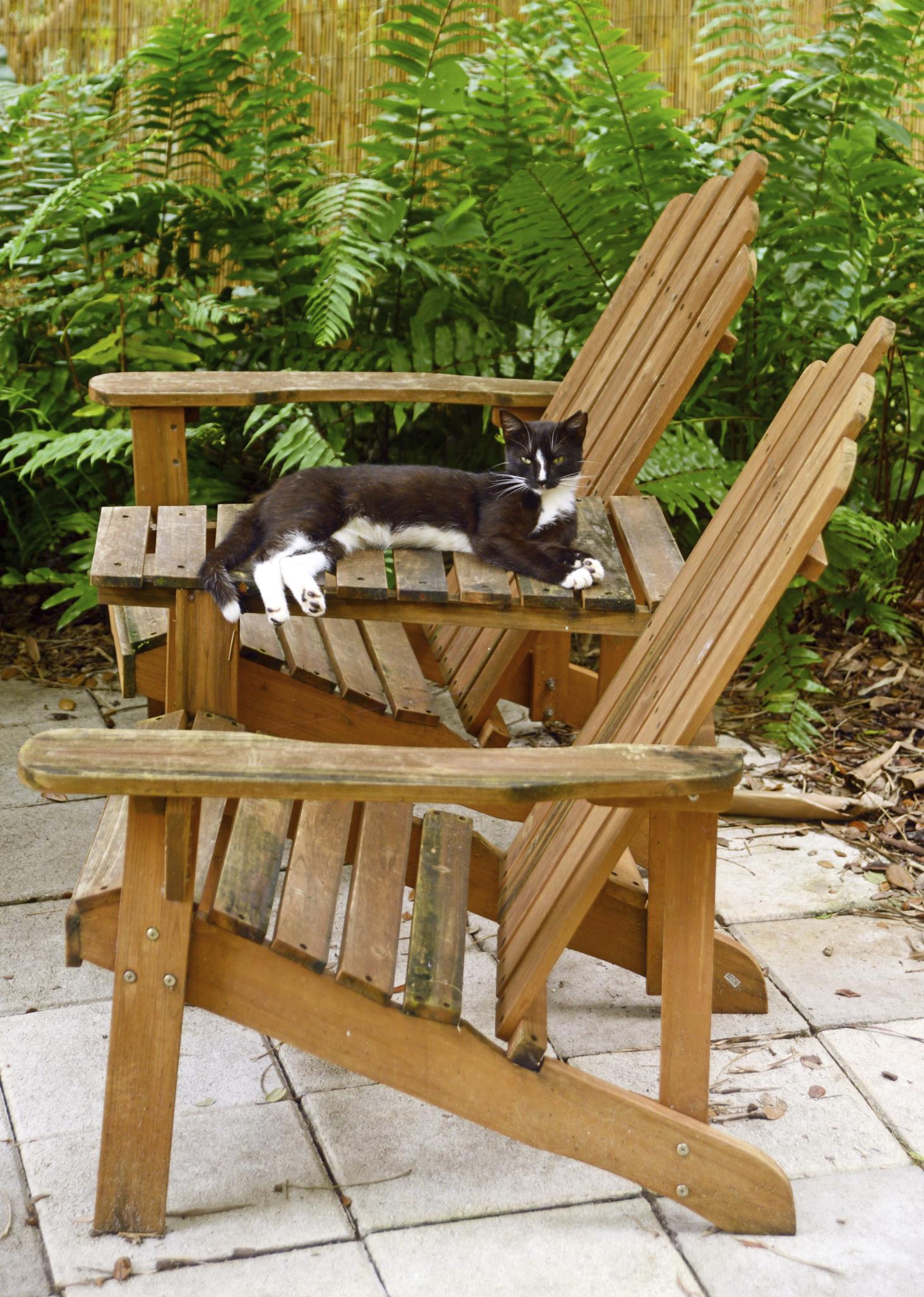 4 m thodes pour loigner les chats de son potager ooreka - Eloigner les chats du jardin ...