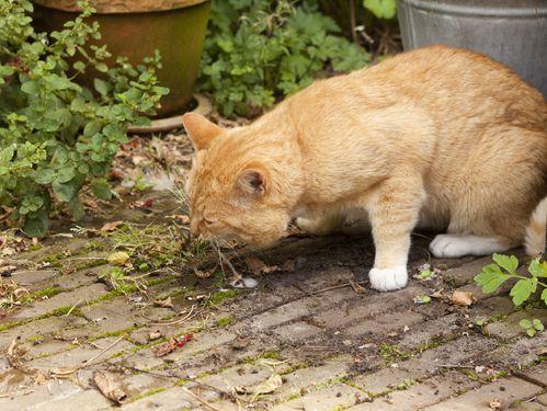 Gastro du chat : causes, symptômes gastro du chat - Ooreka