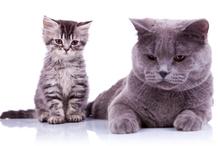 Pension pour chat