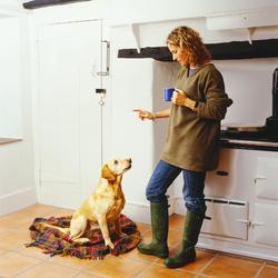 dressage chien infos et prix ooreka. Black Bedroom Furniture Sets. Home Design Ideas
