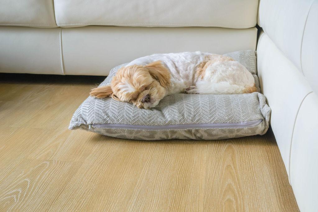 coussin chauffant chien crit res de choix et prix ooreka. Black Bedroom Furniture Sets. Home Design Ideas