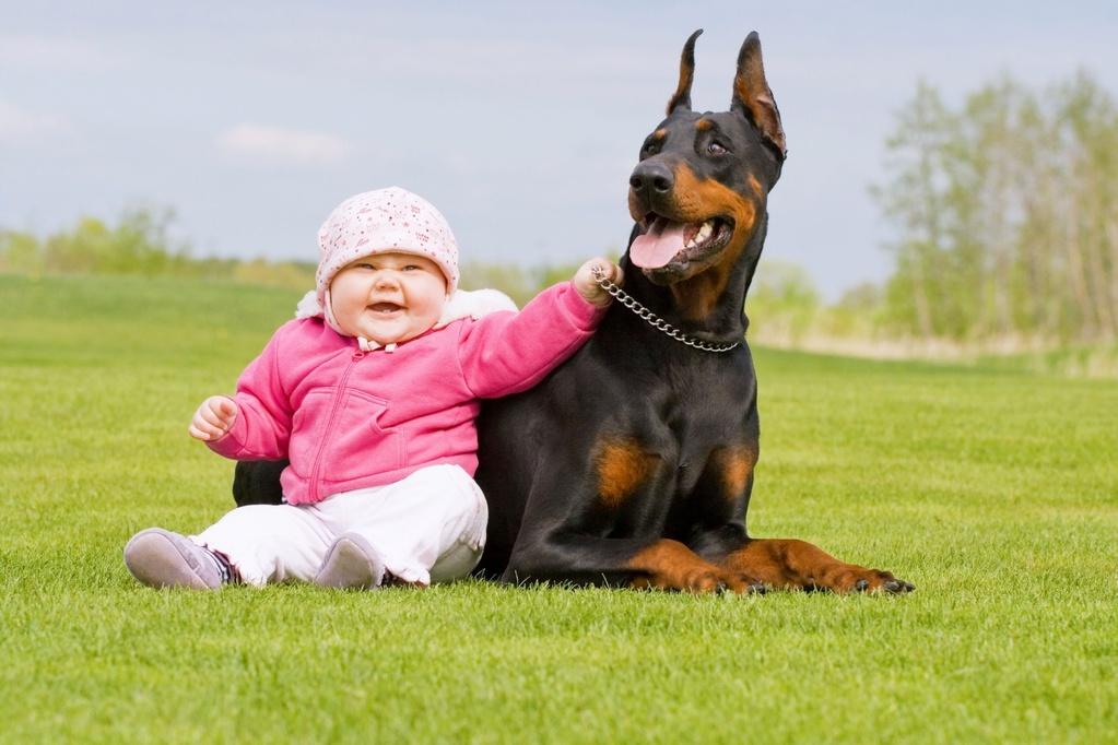 dresser son chien de garde