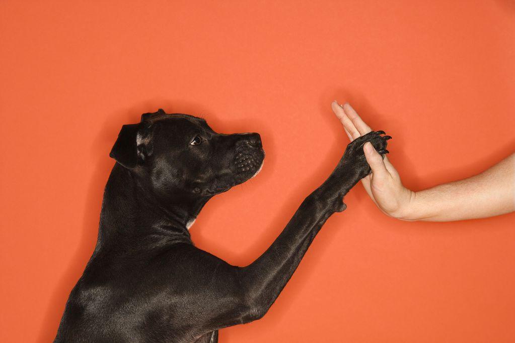 Ergot chien : rôle et entretien de l'ergot du chien - Ooreka