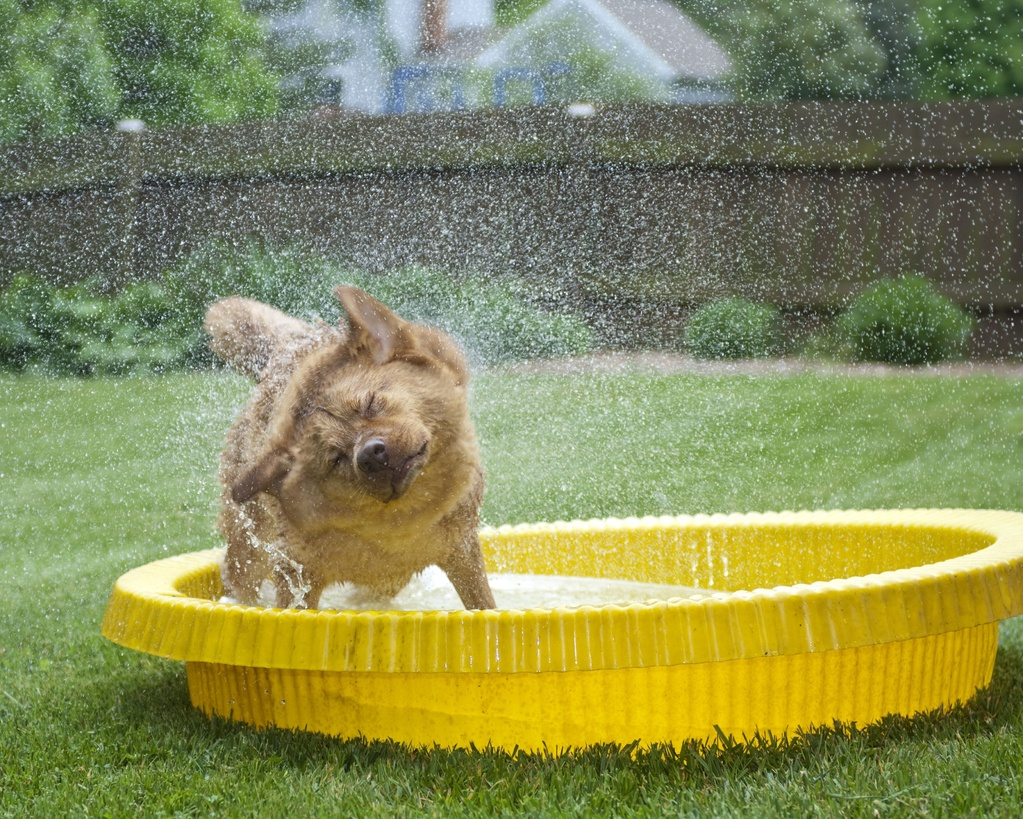 Chien b tard d finition sant d 39 un chien b tard ooreka for Animaux gonflable piscine