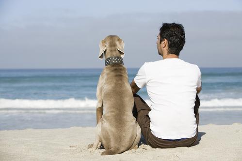 Choisir son chien: tableau des principales races