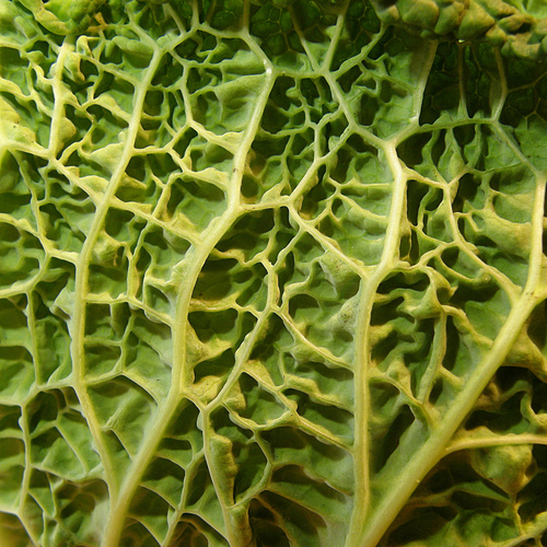 Comment faire cuire du chou blanc ooreka - Comment cuisiner un choux vert ...