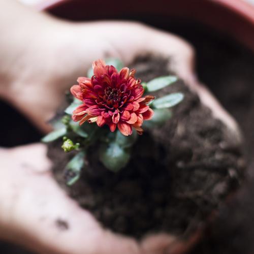 Fleurs fruitiers quoi planter en novembre ooreka for Jardin que planter en novembre
