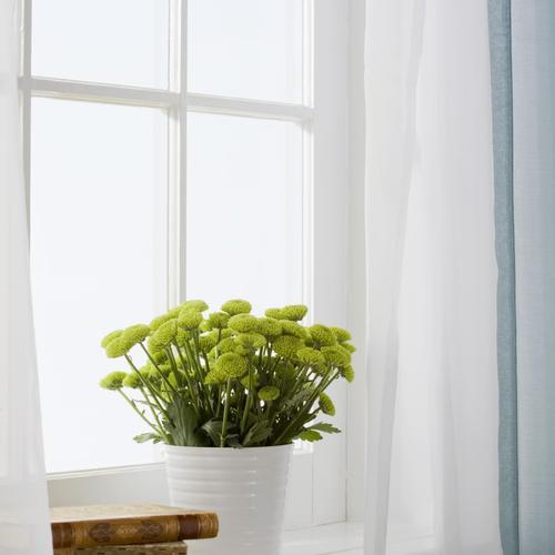 10 techniques de survie sans clim ooreka for Plantes vertes appartement