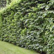 prot ger son jardin du vent am nagement de jardin. Black Bedroom Furniture Sets. Home Design Ideas