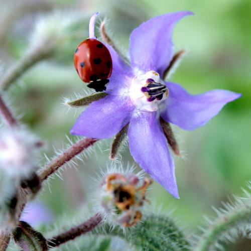 Choisissez bien les plantes de votre jardin