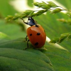 Jardinage le sujet d crypt la loupe page 48 - La lutte biologique au jardin ...