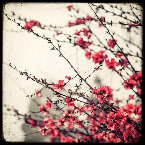Que faire en avril pour les arbres et arbustes d'ornement ?