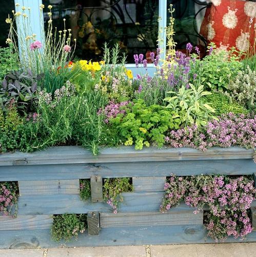 Composer un jardin d'herbes aromatiques sur votre balcon