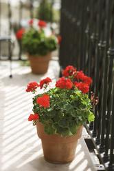 Composteur balcon