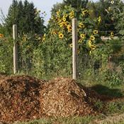 que faire en cas de moucherons dans le compost ooreka. Black Bedroom Furniture Sets. Home Design Ideas