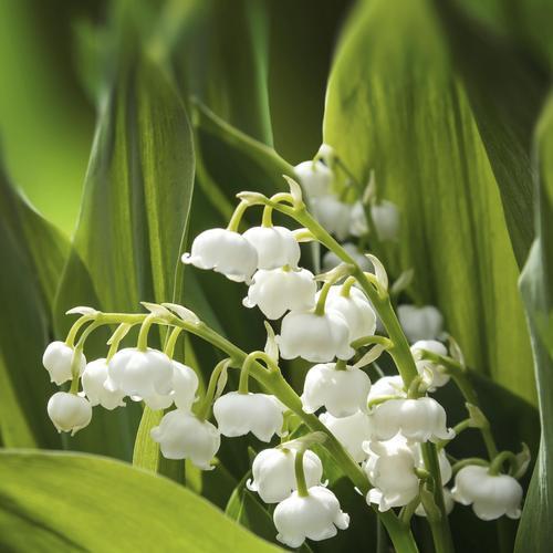 fleur à planter en septembre : liste - ooreka
