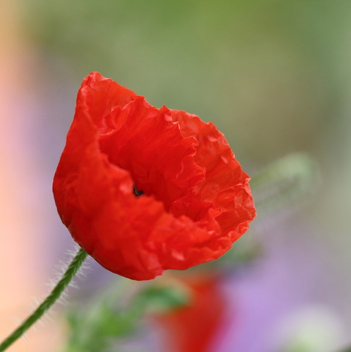 Langage Des Fleurs 10 Plantes Pour S Exprimer Ooreka