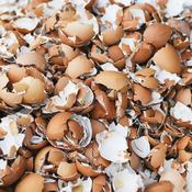 Utiliser Des Coquilles D œufs Au Jardin Jardinage
