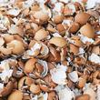 Utiliser des coquilles d'œufs au jardin