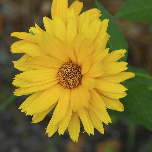 fleur qui fleurit en mai : liste - ooreka