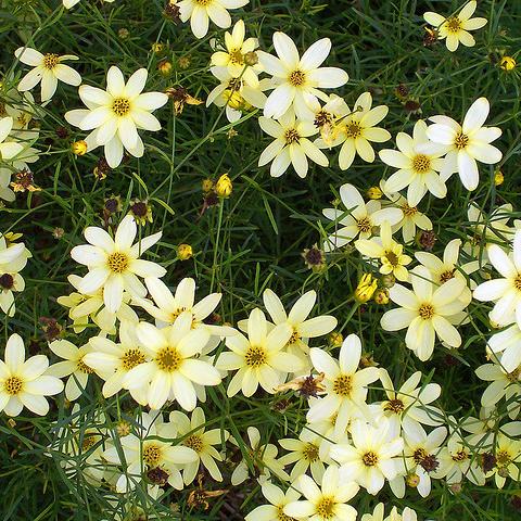 Fleur blanche : liste - Ooreka