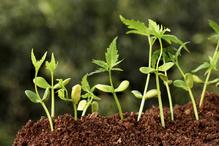 Petites plantes en pleine croissance