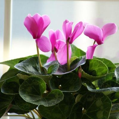 Les fleurs d'intérieur