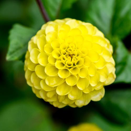 fleur jaune : liste - ooreka
