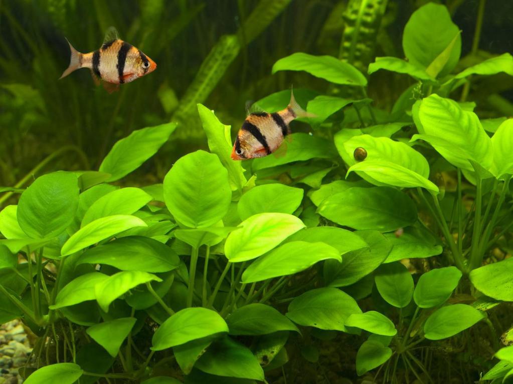 Attention aux l ments naturels pour d corer son aquarium for Conseil sur les plantes