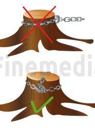 Dessouchage d racinement et retrait des souches d 39 arbres for Prix de l elagage d un arbre
