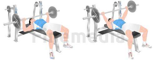Musculation et développé couché
