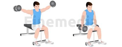 Exercices de musculation et développé latéral