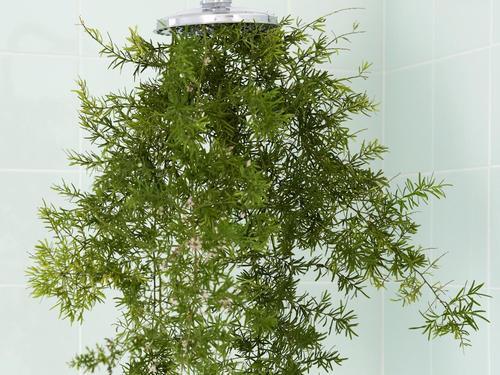 plante verte salle de bain une plante verte quelques tonalits de bois et le tour est jou astuce. Black Bedroom Furniture Sets. Home Design Ideas